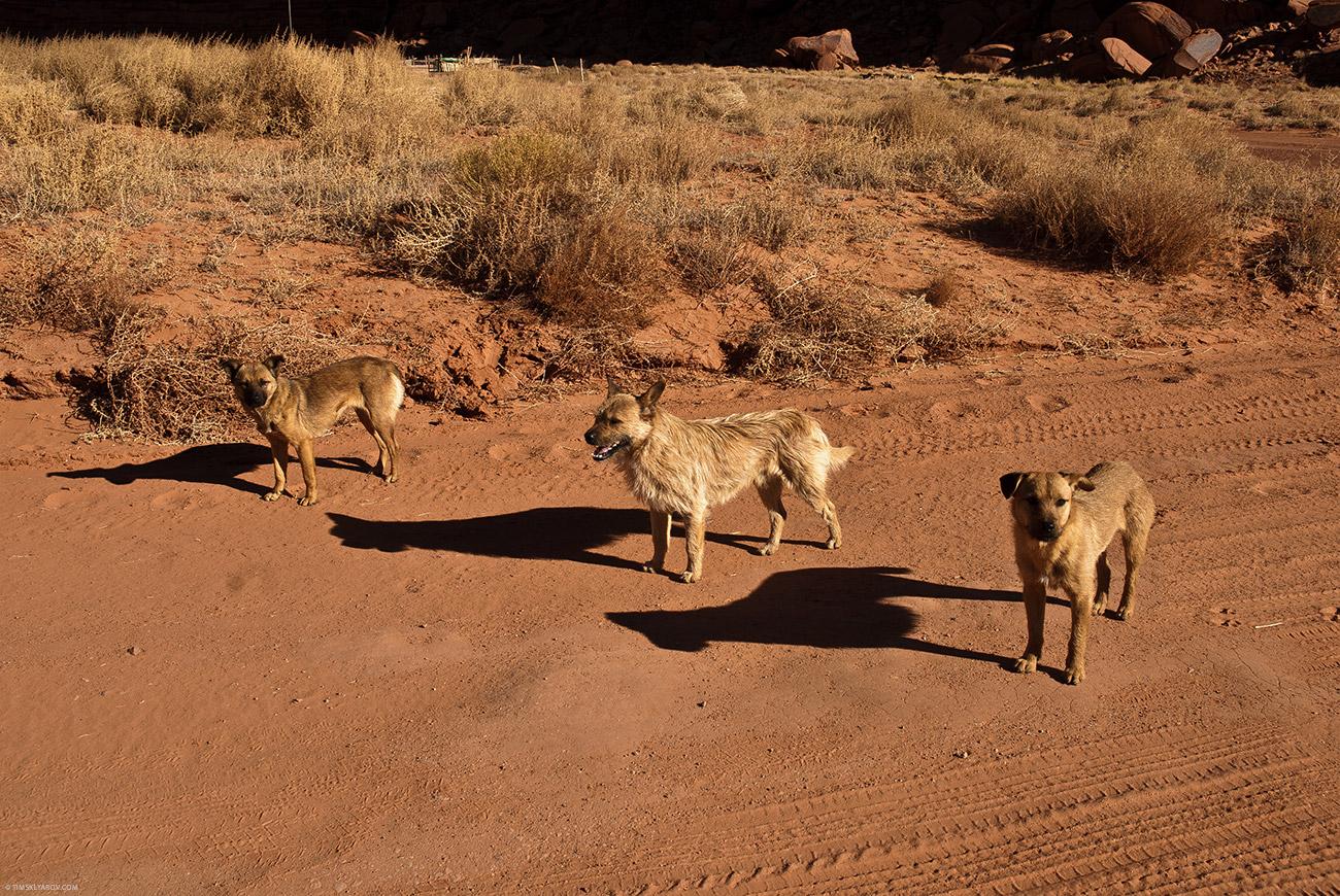Злые собаки Навахо. Скалили зубы и не выпускали из машины.