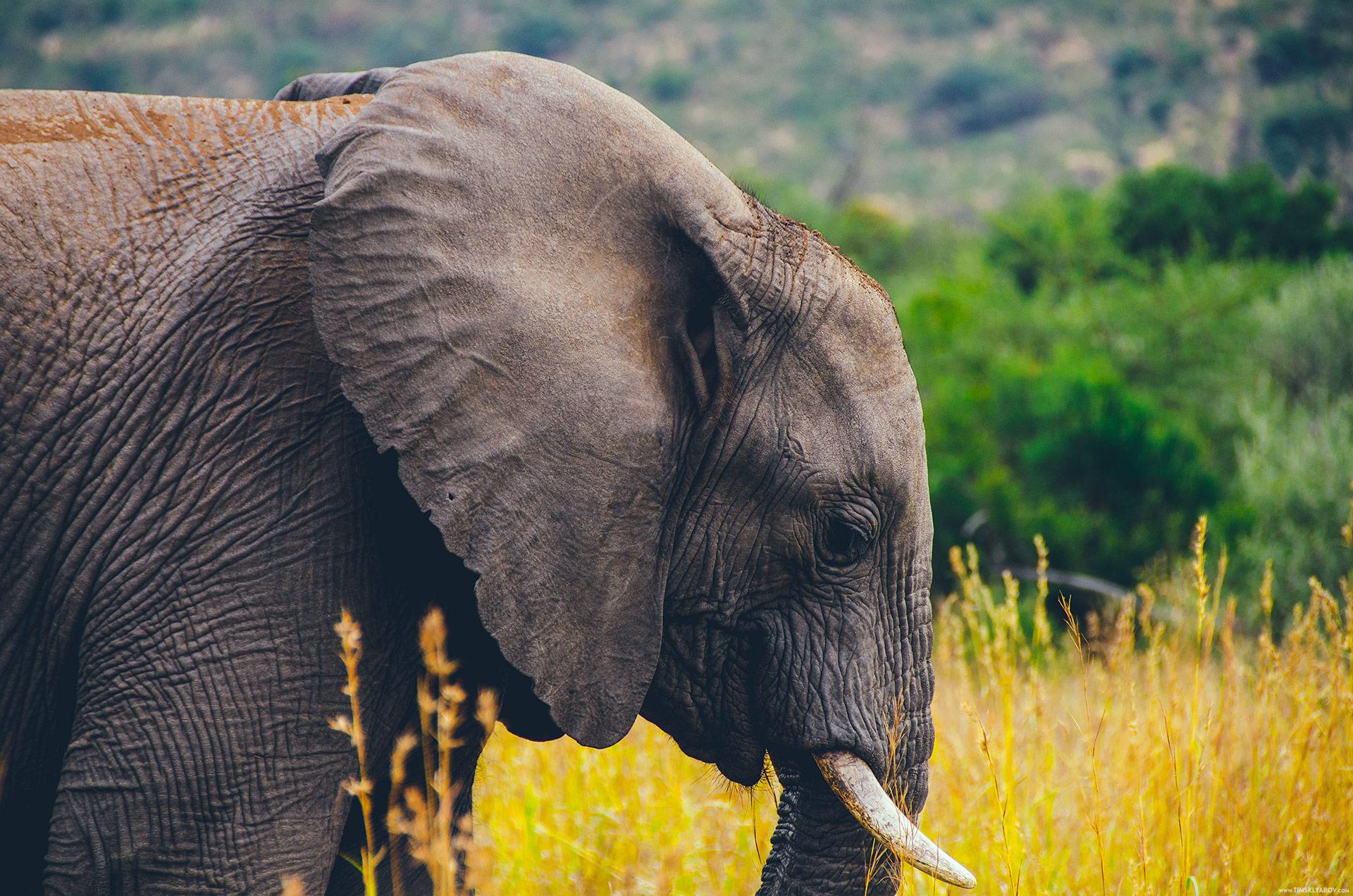 Слоны африка картинка
