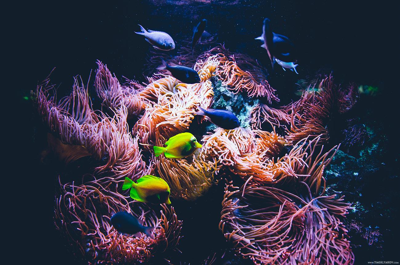 Berlin-Aquarium-01