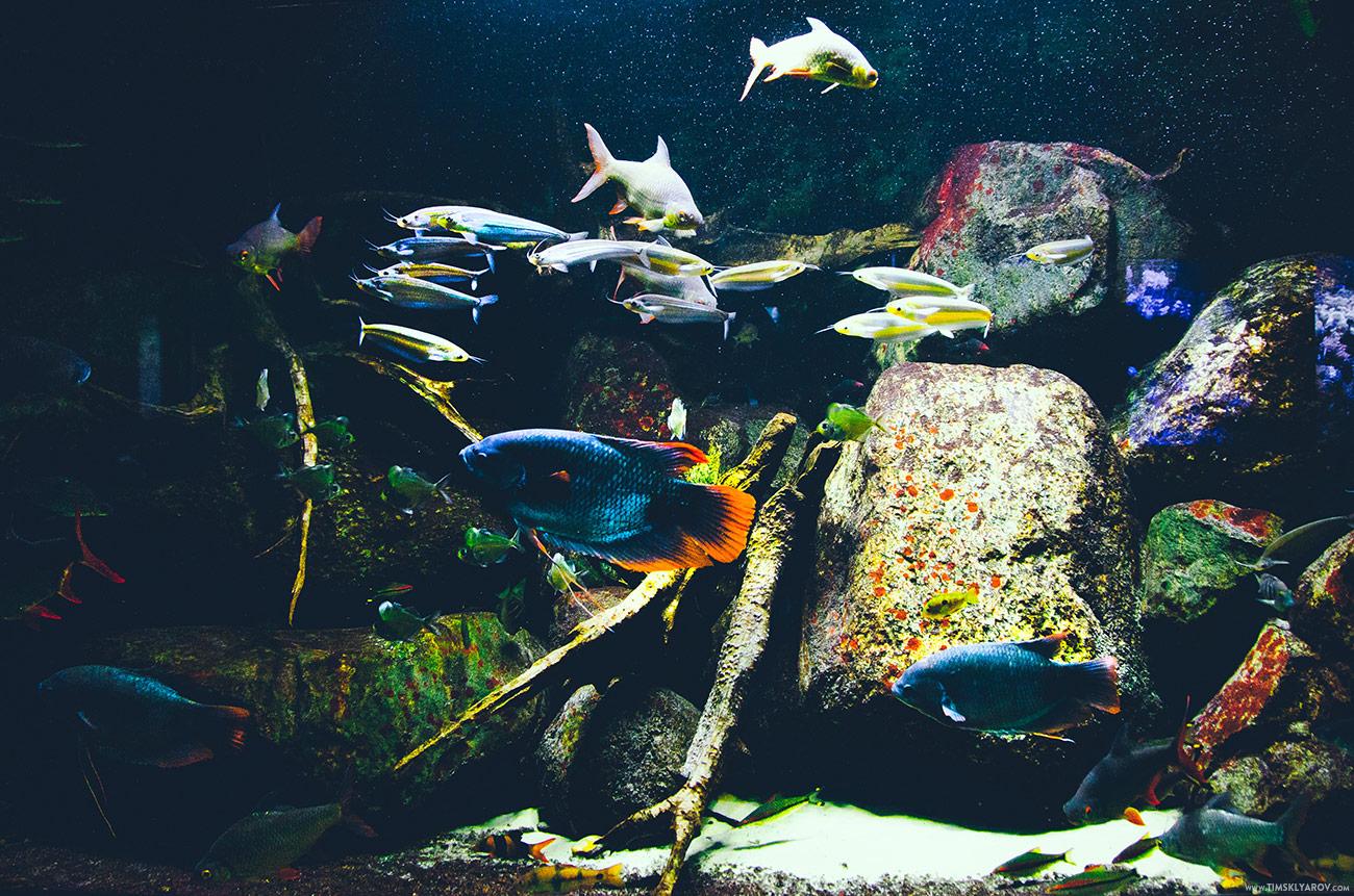Berlin-Aquarium-03
