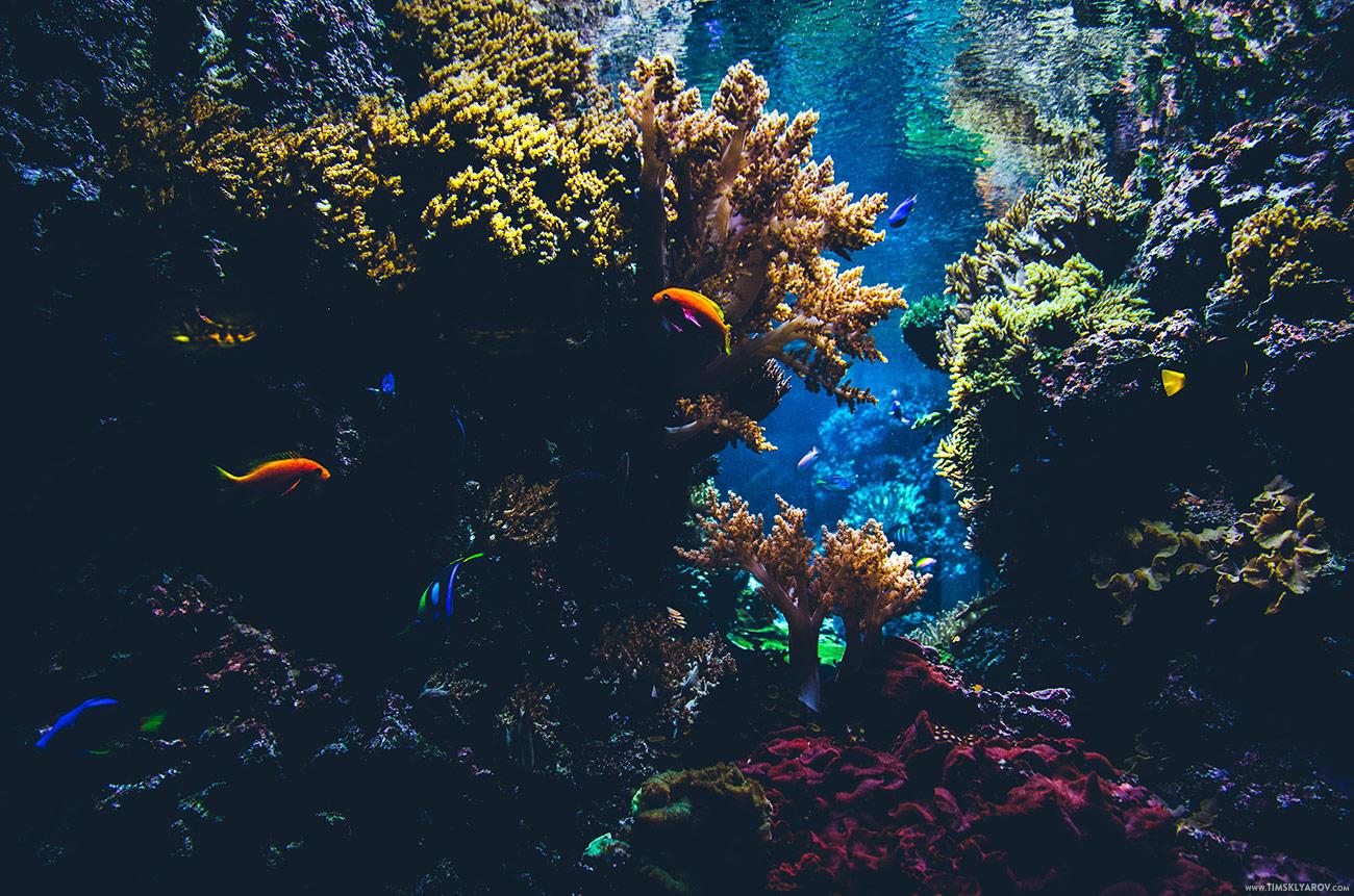 Berlin-Aquarium-04