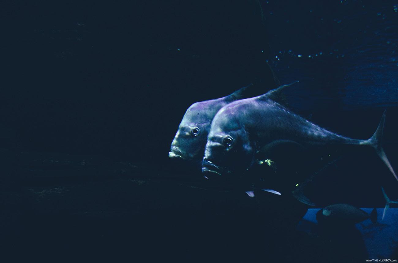 Berlin-Aquarium-13