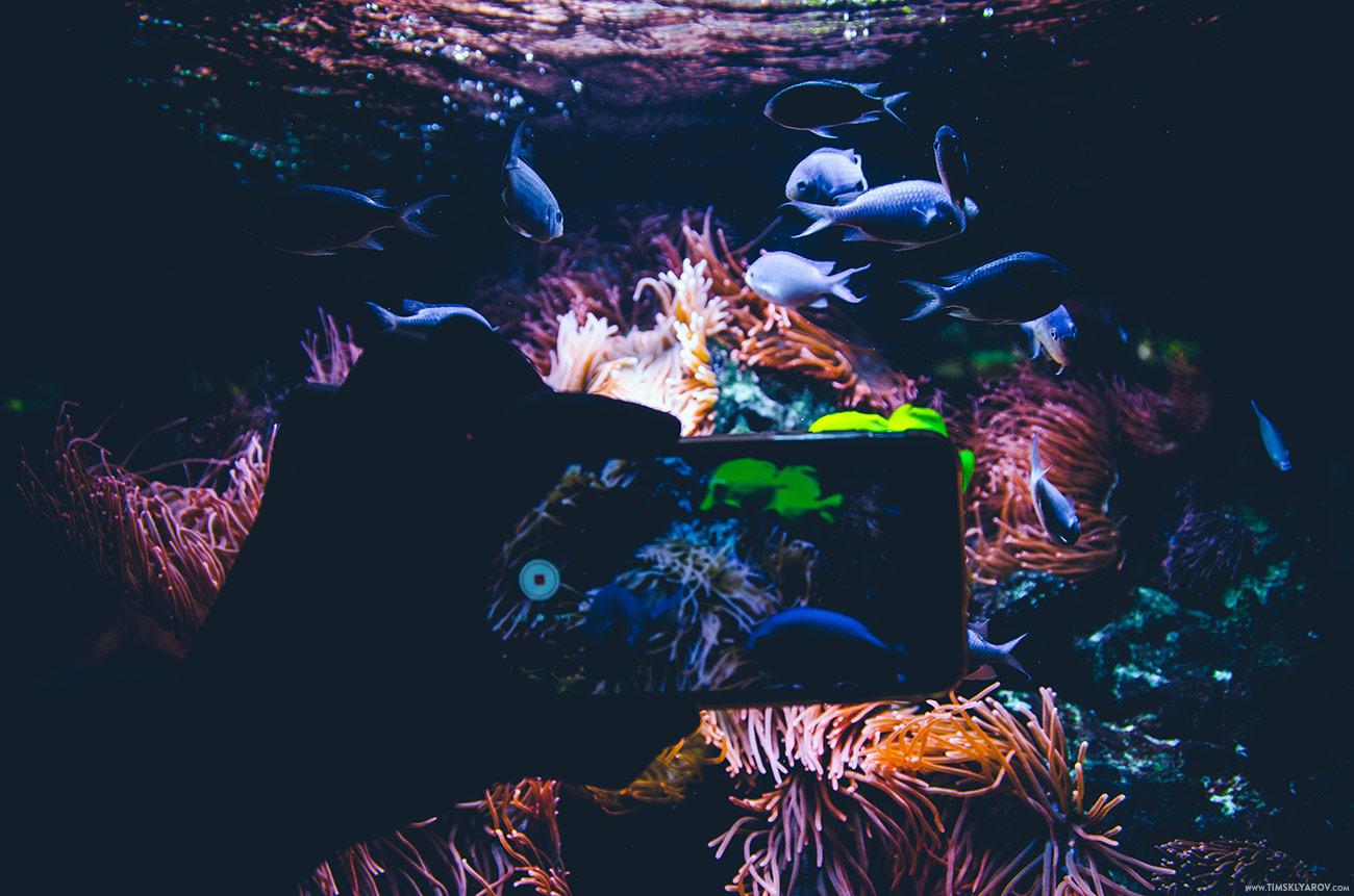Berlin-Aquarium-15