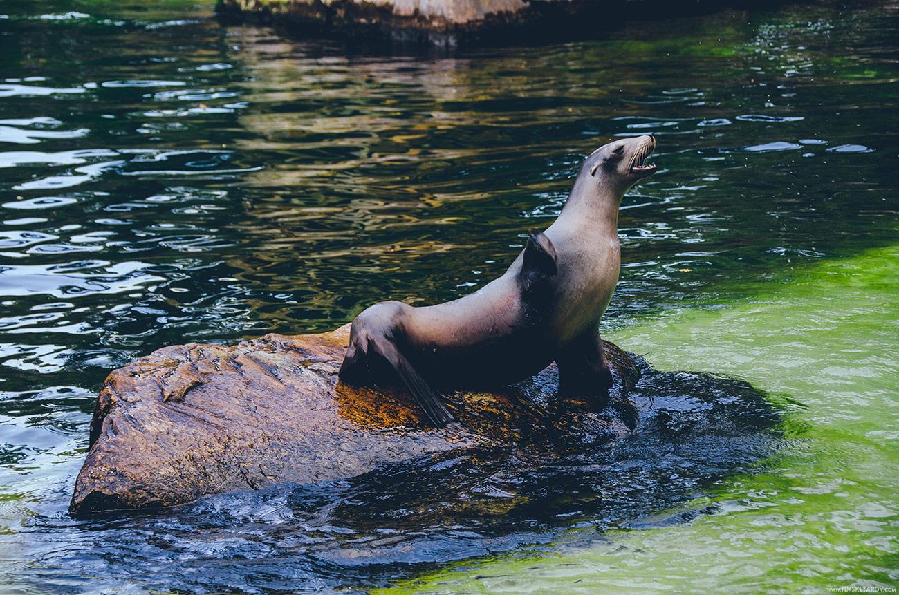 Морские животные представлены котиками и прочими подобными.