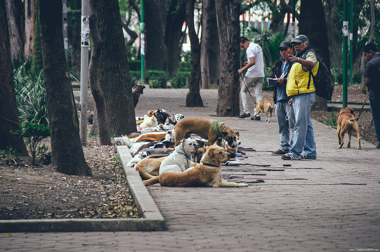Mexico-City-030