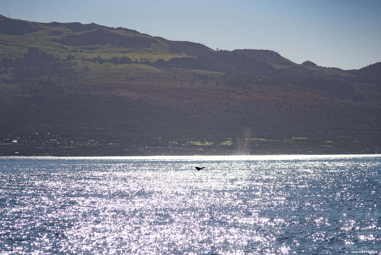 mauiwhales-02
