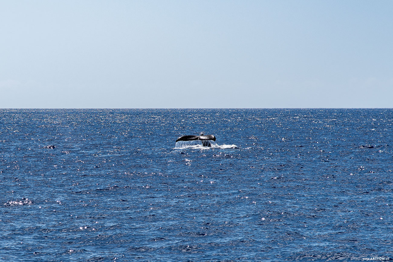 mauiwhales-06
