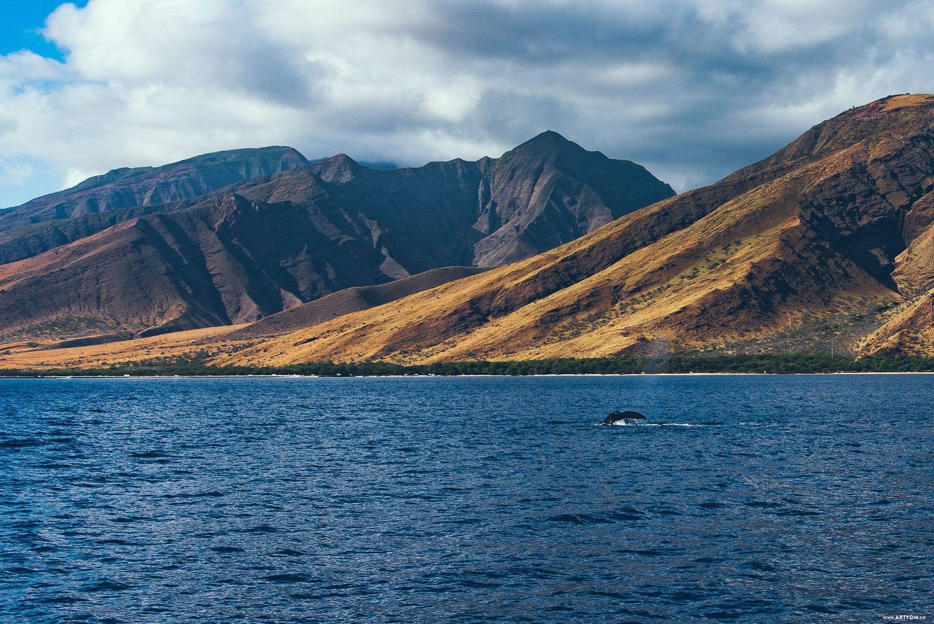 mauiwhales-08