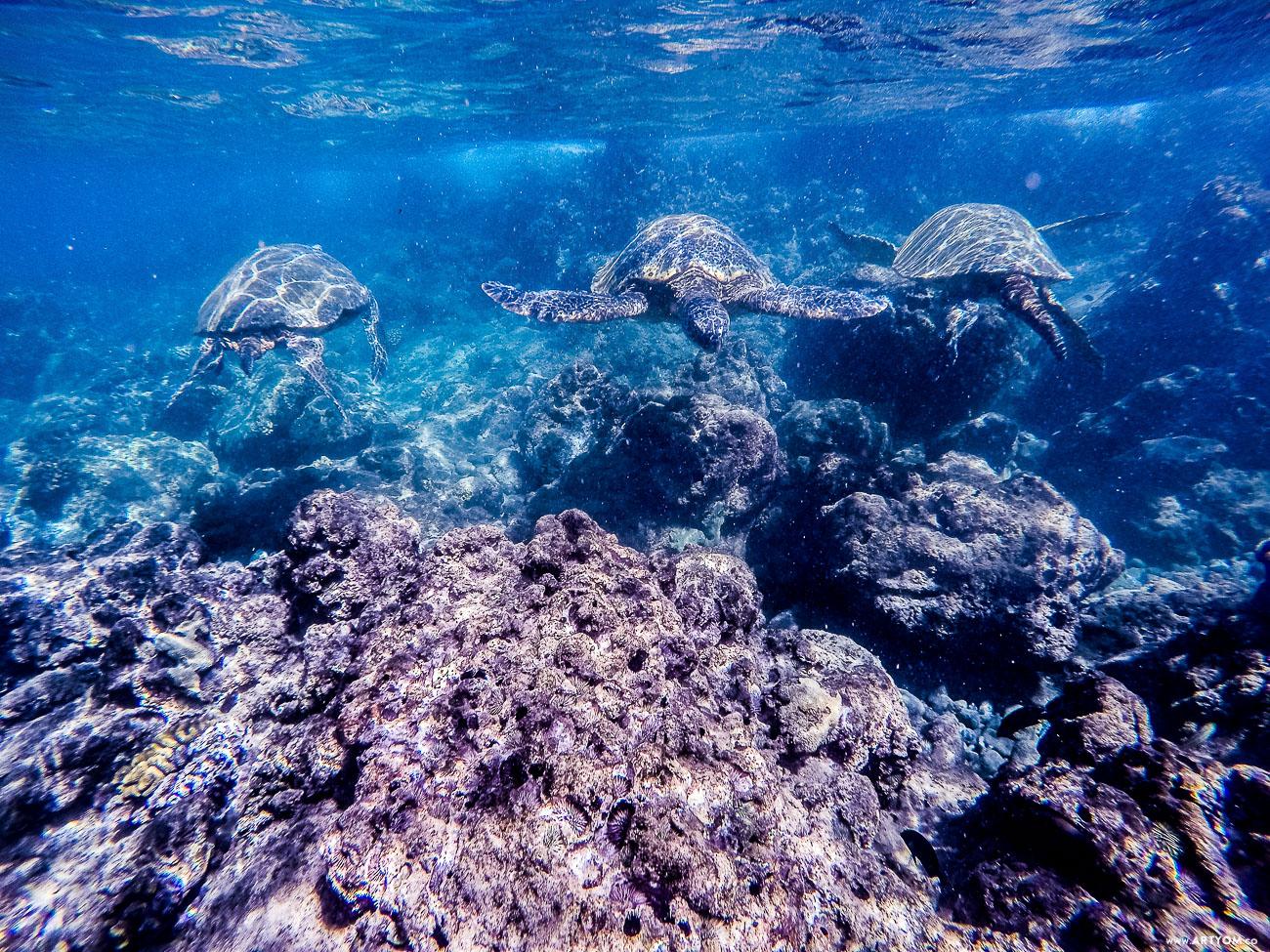 Maui, Hawaii / Мауи, Гавайи